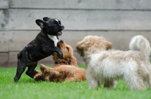 playing-puppies-790638_1920