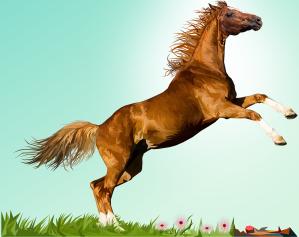 horse-3814350_1280