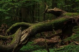 tree-4503535_1920
